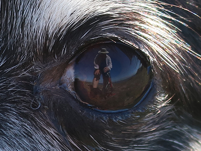 the chihuahua eye close up