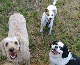 happy dog walker melbourne dogs
